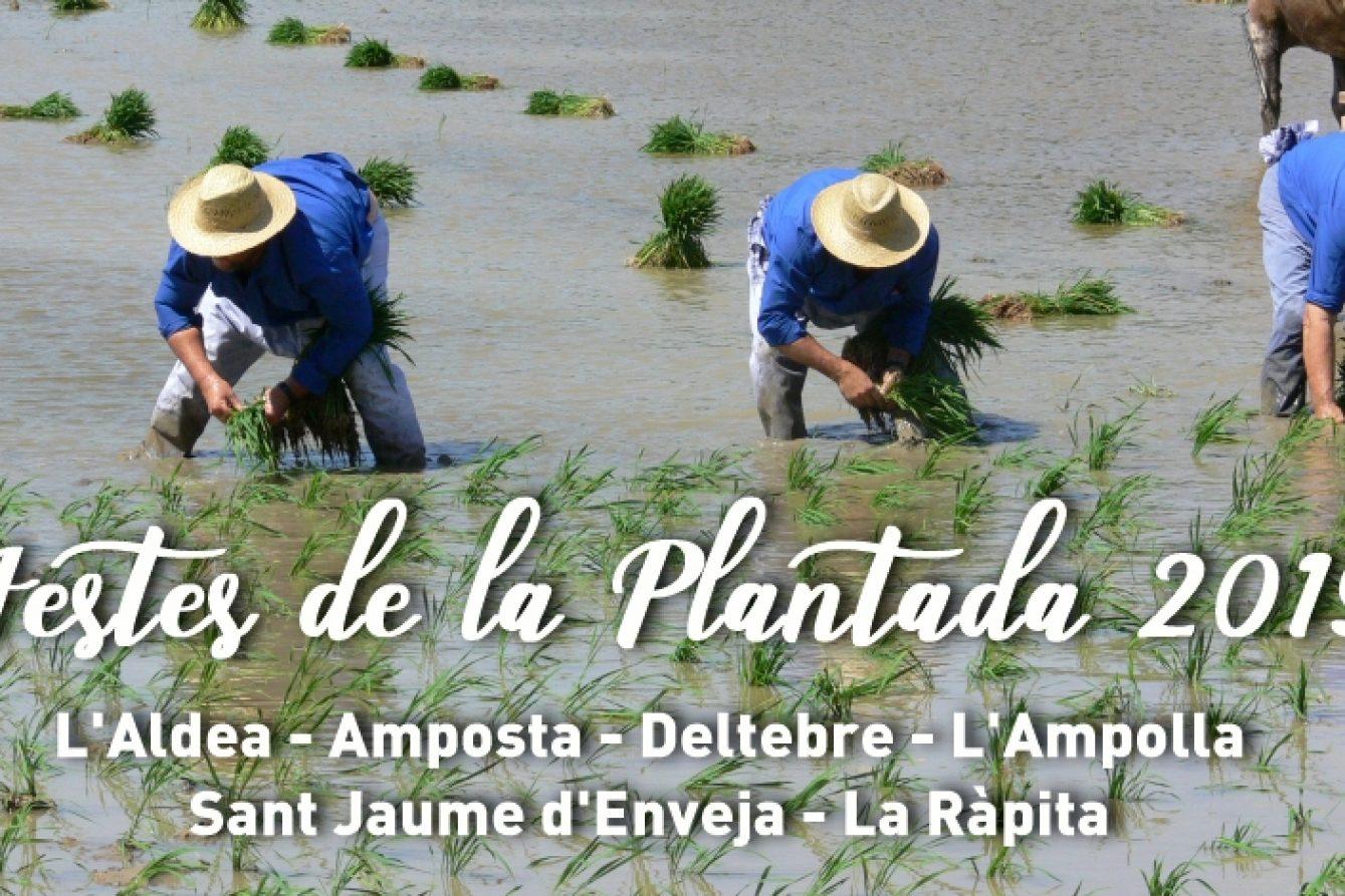 Fiesta planted in Deltebre